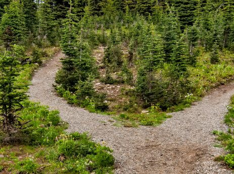 a fork in a mountain path