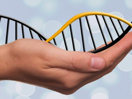 image of DNA held in a person's hand